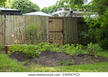 Organic Garden in Backyard