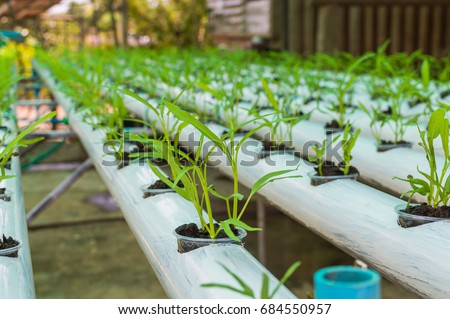 Hydroponics Stock Images Royalty Free Images Amp Vectors