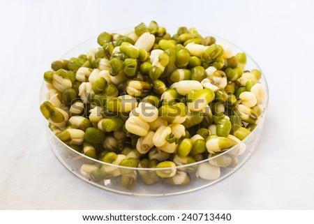 Organic Green Mung Bean - stock photo