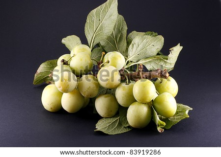 organic green plums on branch isolated on dark background - stock photo