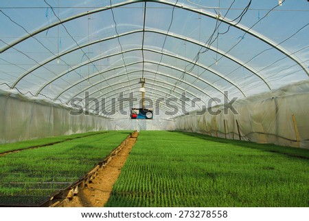 Organic greenhouse. A look into a greenhouse - stock photo