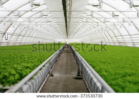 Organic greenhouse. Young plants growing in very large plant in commercial greenhouse - stock photo