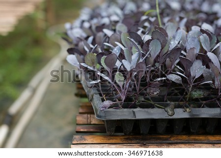 Organic hydroponic green vegetable cultivation farm - stock photo