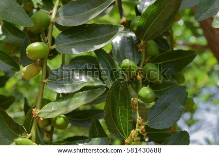 organic olive growing essay Organic olive production manual [paul vossen] it seems to be an argument that growing organic is not profitable, too labor intensive.