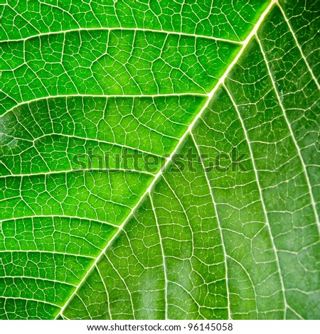 Organic pattern - stock photo