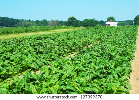 Tree Spinach Stock Images Royalty Free Images Amp Vectors