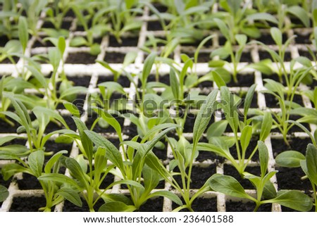 Organic plantation seedlings in the lab - stock photo
