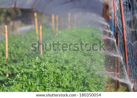 Organic plat being watered in a green house - stock photo