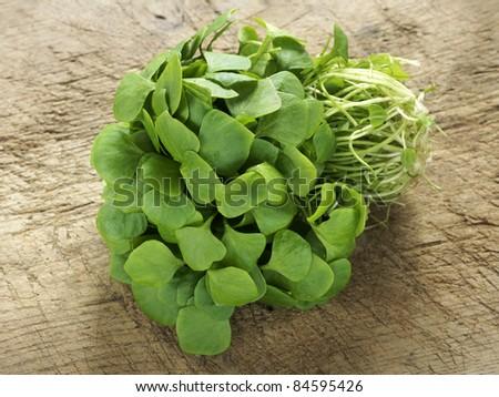 Organic purslane - stock photo