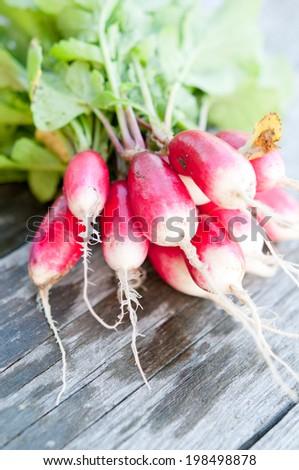 Organic radish - stock photo