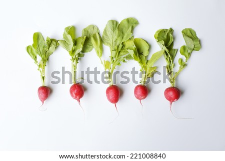 Organic radishes. Five in a row  - stock photo