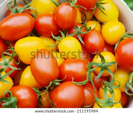 organic, red and yellow tomatoes