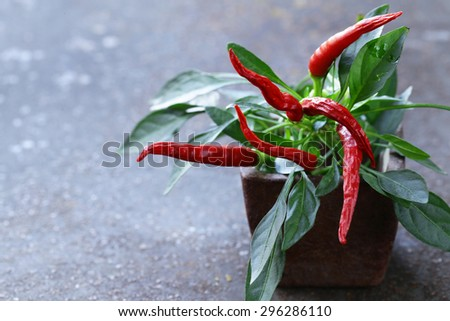 organic red chili pepper with green leaves