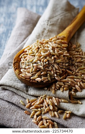 Organic spelt wheat on a wooden spoon  - stock photo