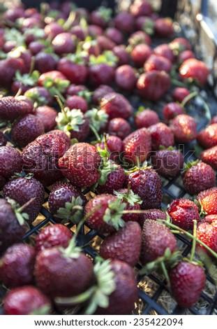 organic strawberries - stock photo