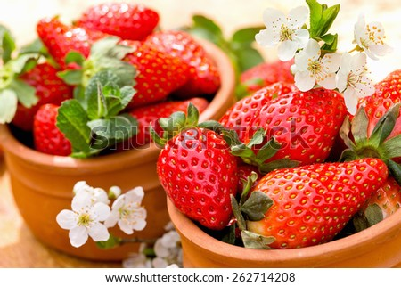 Organic strawberries - seasonal fruit - stock photo