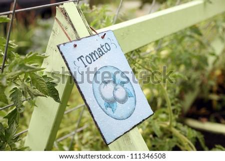 Organic Tomato Garden - stock photo