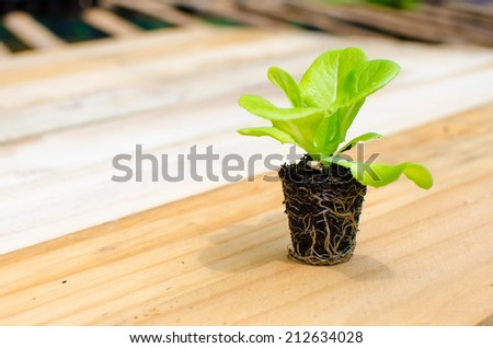 Organic vegetable  - stock photo