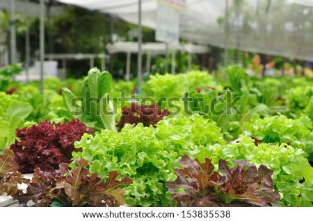 Organic vegetable farms for background. - stock photo