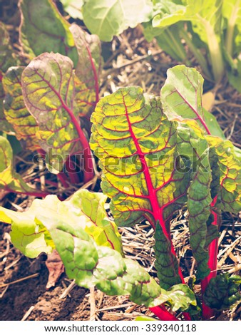 Organic vegetable garden on the far. - stock photo