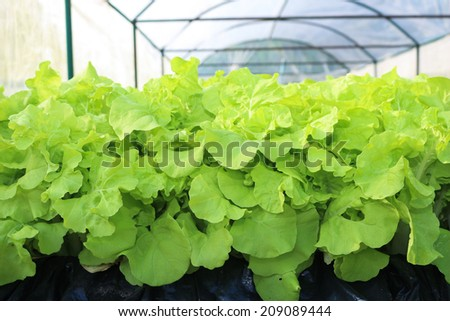 Organic vegetable plots cultivation farm. - stock photo