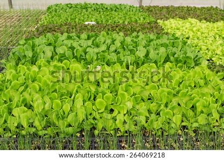 Organic vegetable plots cultivation farm. - stock photo