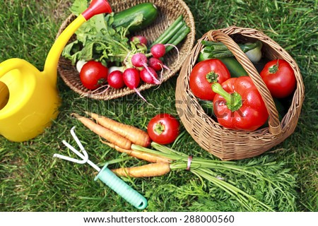 organic vegetables in the garden