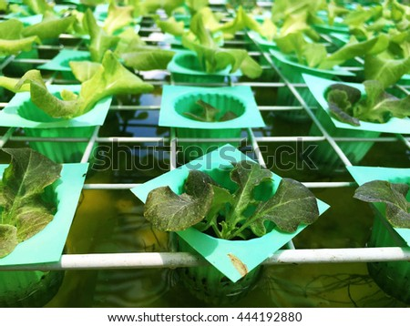 Organic vegetables on the plastic trays.