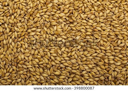 organic wheat grains as  background