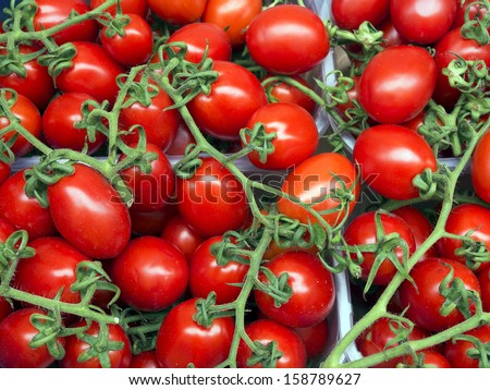 Organically grown red tomatoes on the vine background