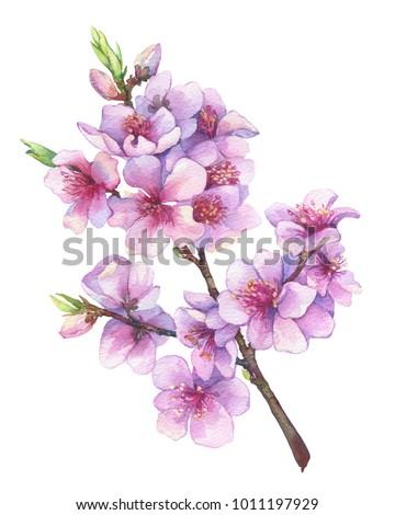 Oriental cherry branch pink flowers japan stock illustration oriental cherry branch with pink flowers japan sakura blossom traditional japanese sumi e mightylinksfo