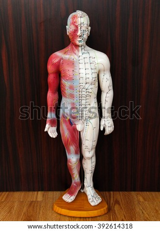 Oriental Medicine model no.2 - stock photo