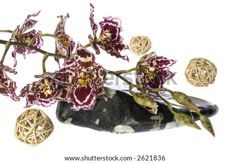 oriental. orchid and stone