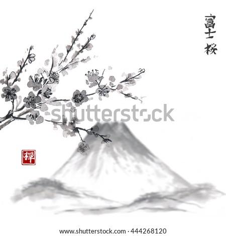 Oriental sakura cherry in blossom isolated on white background. Traditional Japanese ink painting sumi-e. Contains hieroglyph - Fujiyama, sakura, zen - stock photo