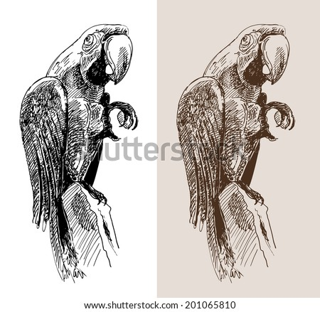 original artwork parrot, black sketch drawing bird, isolated on white background, and sepia color version, raster version - stock photo