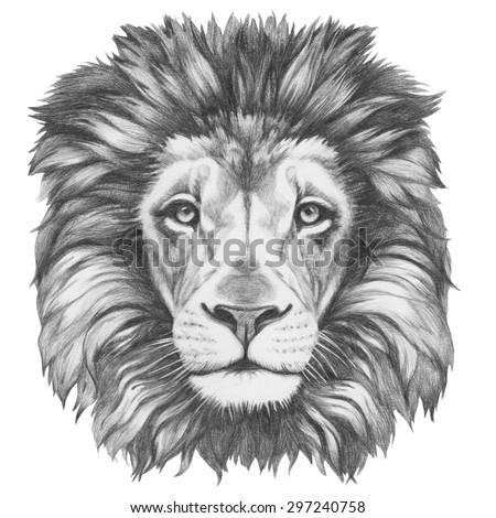 lion sketch stock photos, royaltyfree images  vectors  shutterstock, coloring pages
