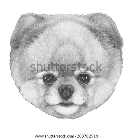 original drawing of pomeranian isolated on white background