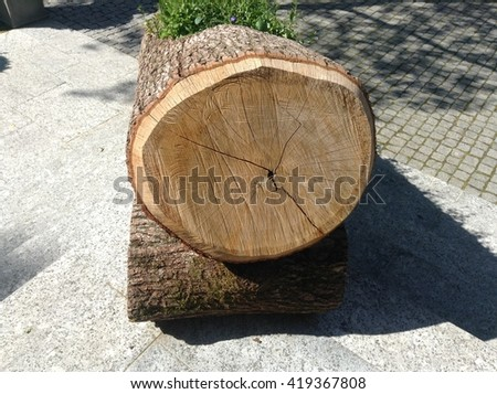 Original Flower Bed in a wooden log   - stock photo