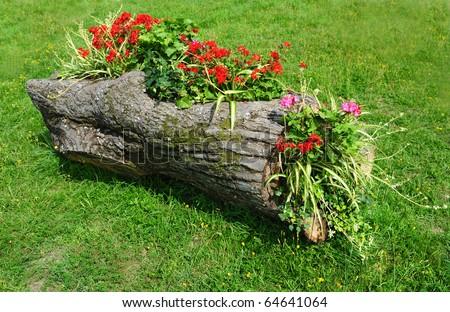 Original Flower Bed in a wooden log of Formal Garden - stock photo
