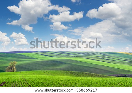 Original panoramic view of fields in beautiful rolling and striped hills, big size