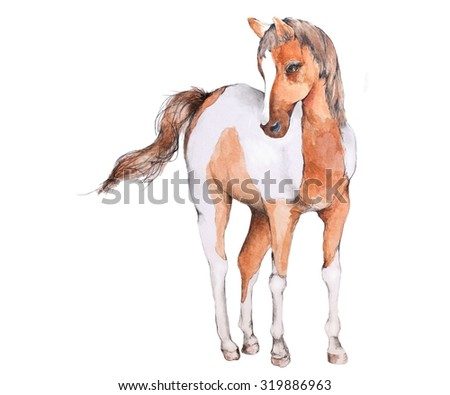 Original Watercolor Illustration of a Brown & White Horse or Pony