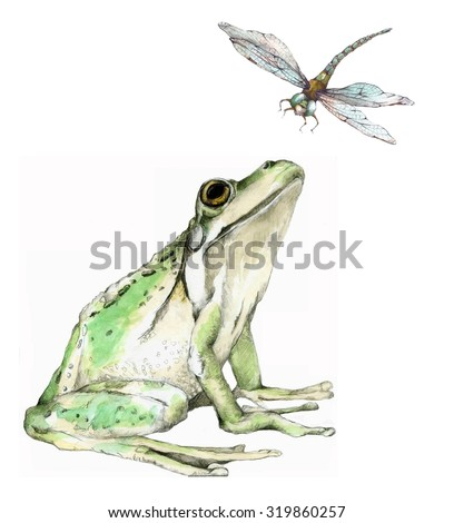 Original Watercolor Illustration of a Frog and Dragonfly