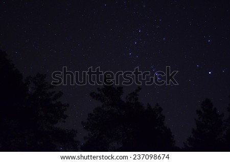 Orion over Ukrainian forest. Near Kiev  - stock photo