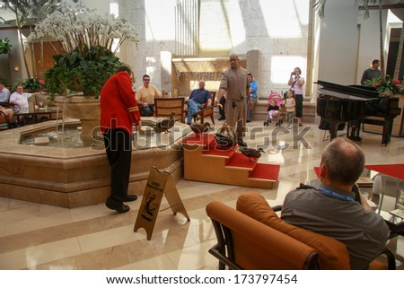 ORLANDO, FLORIDA, USA -  March 11, 2008:  Five ducks leaving from fountain in Peabody Hotel on March 11, 2008 in Orlando. It became everyday tradition since 1930 and now ducks are permanent residents  - stock photo