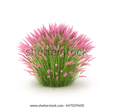 Ornamental grass grasses landscaping high grass stock illustration ornamental grass and grasses for landscaping high grass isolated on white background 3d illustration workwithnaturefo