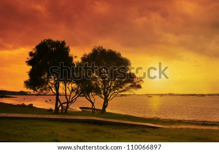Ornamental olive trees against the sunset at Arosa estuary
