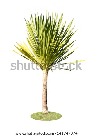 Ornamental plants of Thailand,Tree in Thailand ,isolated on white background - stock photo