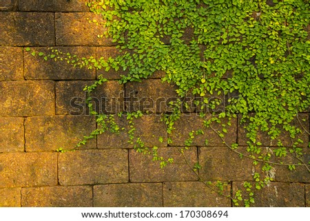 Ornamental plants on red wall