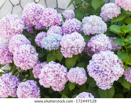 Image gallery ornamental plants