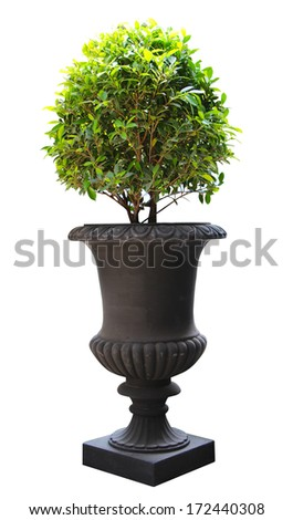 Ornamental Small green decorative tree - stock photo